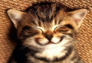chat-sourire-motivation