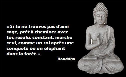 Quelque chose de nouveau assez Top 10 des citations de Bouddha @NE_83